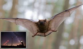 Are Bats Blinded By Light Thousands Of Bats Are Killed By Wind Turbines Every Year