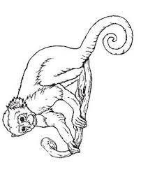 Immagini Scimmia Da Colorare Disegni Da Colorare