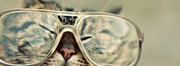 cat sungles facebook covers