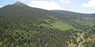 Resultado de imagen para foto de pinares