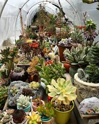 backyard succulent garden design