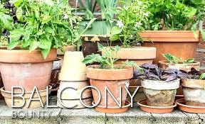 herb patio garden apartment balcony with potted pots garden patio vegetable ideas gardening creating a fruit herb patio garden