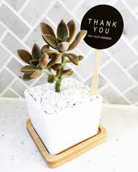 the 115 best images about wedding favours idea, succulents Wedding Favours Brisbane thanks for all the kind messages, comments and likes lovely people ❤ ❥❥ · wedding favoursbrisbanechristeningbaby macaron wedding favours brisbane