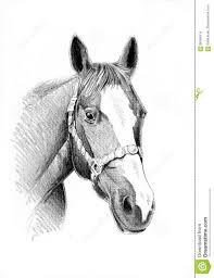 Disegno A Matita A Mano Libera Della Testa Di Cavallo Illustrazione