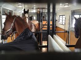Horse Shipping Quotes Mesmerizing Foothills Horse Transport US Canada