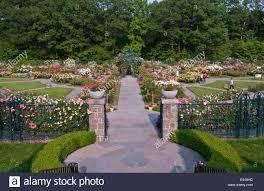 peggy rockefeller rose garden at the new york botanical garden stock image