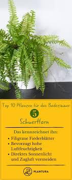 Pflanzen Fürs Badezimmer Unsere Top 10 Topfpflanzen Garden Und