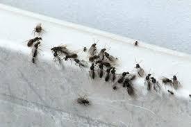 Ants In The Bathroom Flying