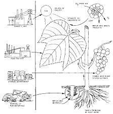 E. Leaves