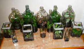 recycled glass terrariums terrariums in jugs
