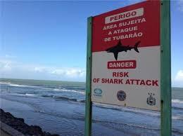 best requins images blog sharks and blog sites attack shark sharkporn enquetebdx risque espacepublic
