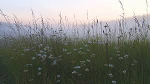 grass field at night. Daisies And Grass On The Field At Night In Fog Stock Video Footage - VideoBlocks
