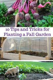 9 Crops You Can Plant In August For Fall And Winter Harvest Fall Garden Crops