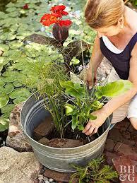 container water garden. Beautiful Garden Woman Placing Plants In Metal Container Water Garden And Container Water Garden N