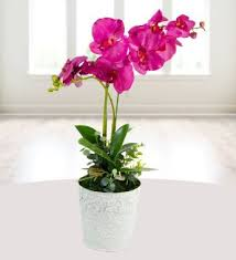 Office Flower Benefits Of Artificial Flowers In Your Office Flower Press