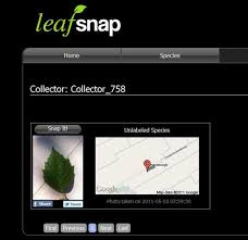 Ohio Leaf Identification Chart Leafsnap Is A New App To Identify Trees Treehugger
