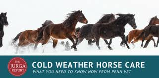 cold weather horse care what do horses really need to avoid winter health problems