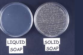 Petri Dish Bacteria Identification Chart Observing Microbes Observing Bacteria In A Petri Dish