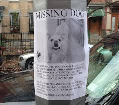 how to make lost dog flyers 7 dos and donts for making a lost dog flyer