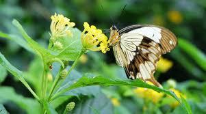 Konya Kelebekler Vadisi Giriş Ücreti 2020, Nerede, Nasıl Gidilir?