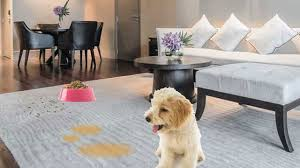 urine stain removal from carpet oz