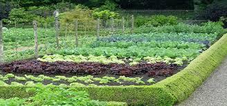 best soil for vegetable garden. ingenious idea organic vegetable gardening amazing best soil for garden
