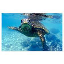 friendly turtle canvas wall art on sea turtle canvas wall art with buy turtle wall art from bed bath beyond