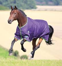 Rug Fitting Guide Shires Equestrian