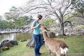 Deer Feeding Chart 2018 Ga Feeding Deer In Nara Park Japan Travel Yes Please