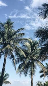 Let s go coconuts enjoy 10 tropical iphone wallpapers. Palms Iphone Wallpaper Wallpaper Paisagem Paisagem Fotos Palmeiras