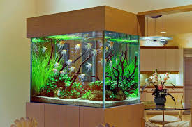 white house fish tank decoration amazing home aquarium ideas you must see  stunning interior idea with