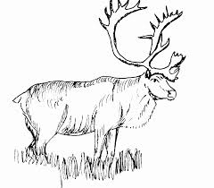 Realistic Deer Coloring Pages Images Pictures