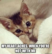 That One Adorable Kitten Meme to Send to Someone You Like ... via Relatably.com