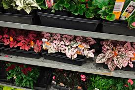 plants at great s for charity this saay