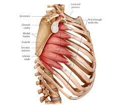 Massage For The Serratus Anterior Muscle
