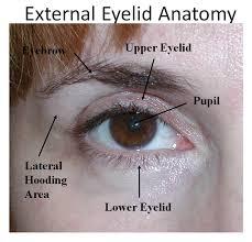 Eyelid Anatomy Eyelid Surgery Blepharoplasty Dr Garrett Bennett Ny Sinus