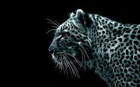 Snow Leopard, desktop wallpaper nr ...
