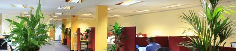 office designer online. Workplace Well-being: The Effects Of Biophilia On Office Design Designer Online