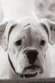 So Rührend Abschiedsbrief Von Einem Hund Galade