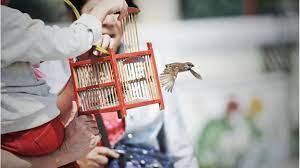 """ปล่อยนก-ปล่อยปลา"""" ทำบุญหรือทำบาปกันแน่ - Chiang Mai News"""