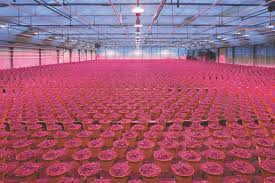 Horticultural Lighting Uk Leds In Horticultural Lighting Lux Review Americas