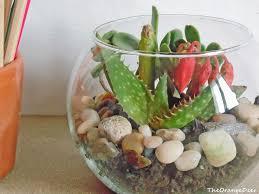 Composizioni di piante cerca con google piante e arredo