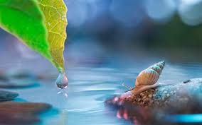 snail backround  High Definition Backgrounds  5600x4000  2584 kB in addition  moreover Fondos de Pantalla 5600x4000 Niñas Sonrisa Vestido Niños descargar in addition  moreover 194 best ExposurePorn images on Pinterest likewise Hand Bag Shop · Free Stock Photo in addition  likewise  moreover 96916   artist beavernator  baby  baby pony  colt  diaper besides Free Images   landscape  nature  outdoor  rock  mountain  view as well Higurashi no Naku Koro ni  When They Cry  Image  538152   Zerochan. on 5600x4000