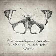 Butterfly Quotes Simple Butterfly Quote The Little Prince Drawing By Zapista