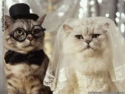 cats twitter background. Beautiful Cats Rightclick Here And Save The Wedding Of Cats Background Image To Twitter Background