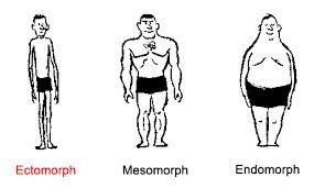 Body Type Chart Ectomorph Gymnastics Coaching Com