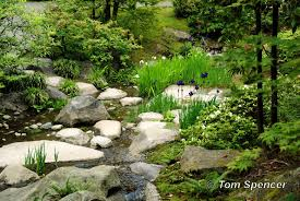 Small Picture Seattle Japanese Tea Garden Faux Stream Bank soulofthegardencom