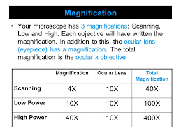 Microscope Magnification Chart Mircroscopes Tools Of Science Maryland Science Content