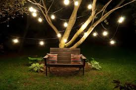 image of commercial outdoor string lights tree