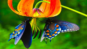 Cute Butterflies Are Hanging On Flowers ...
